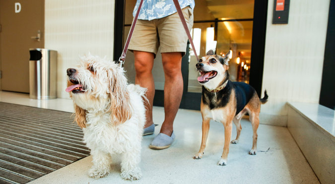 Bella, left, and Luka are among about 175 dogs living at One Brooklyn Bridge Park. Credit Nicole Craine for The New York Times